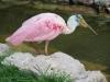 opa hans geburtstag im vogelpark