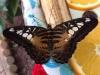 august 2013 - insektenmuseum steinhude
