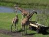 mai 2014 - im serengeti-park