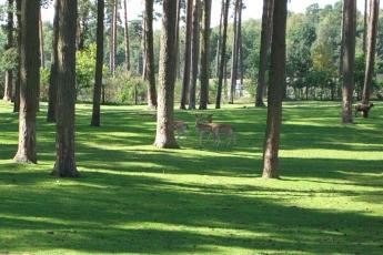 im serengeti park