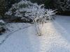 kevin im schnee