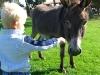 auf dem ponyhof