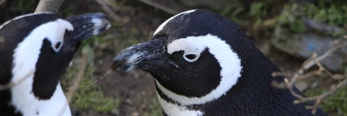 februar-2014-im-zoo